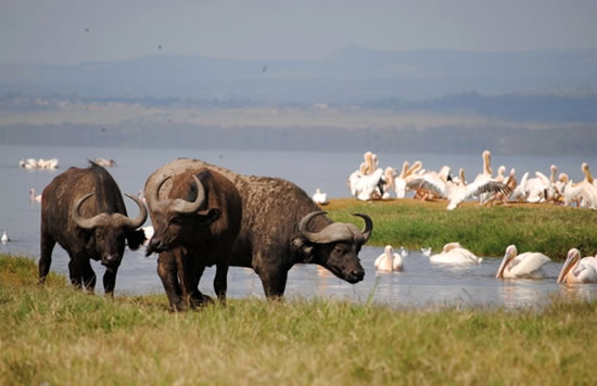 Lake Nakuru National Park Daytrip
