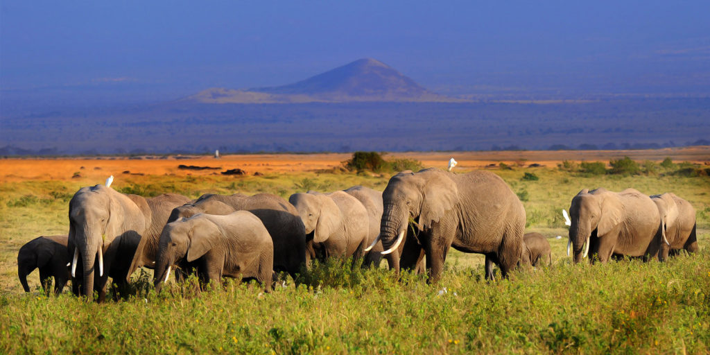 Amboseli Elephant Budget Country Safari