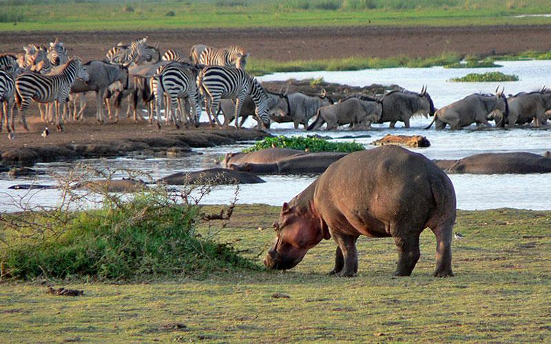 Ngorongoro Crater & Manyara Safari