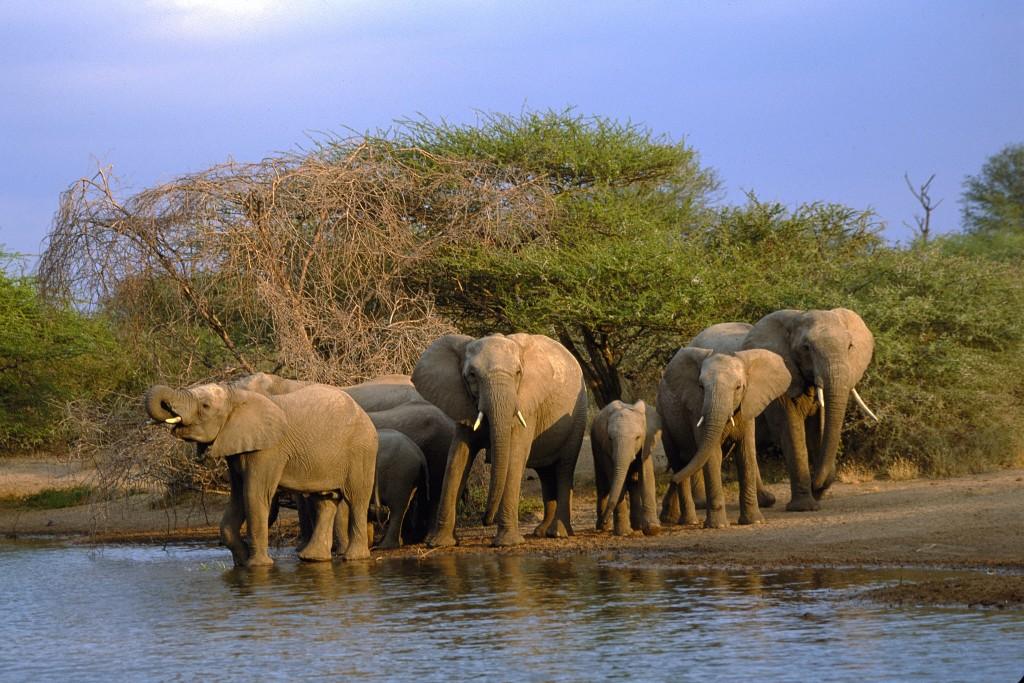kruger wildlife safaris
