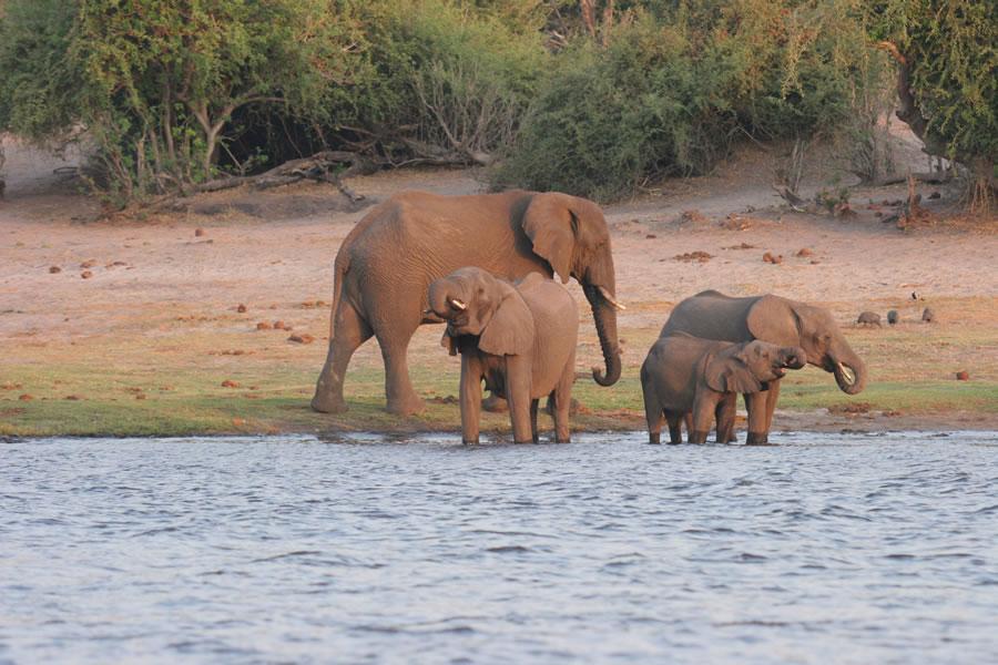 7 Day Best of Botswana Safari