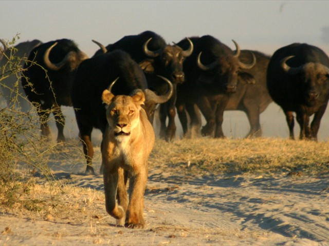 9 Day Southern Africa Safari