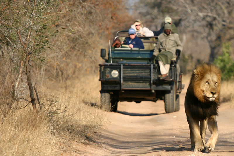 3 Day Classic Kruger Park Safari