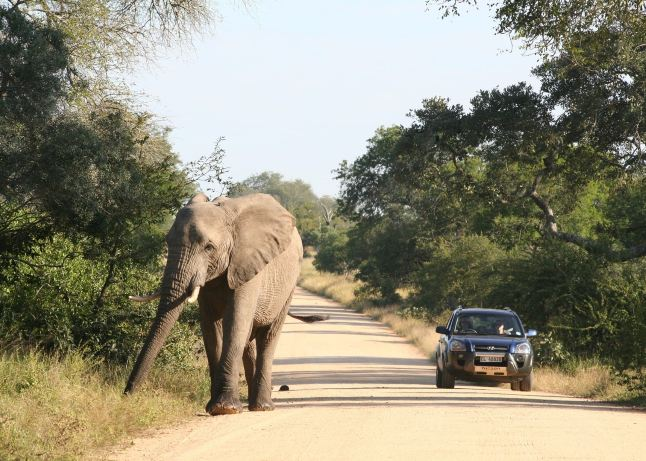 8 Day South Africa Self Drive Safari
