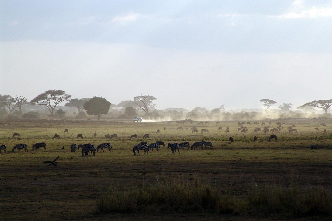 Kenya Safari Tours | Best Safari In Kenya | Tours | Cost & Prices