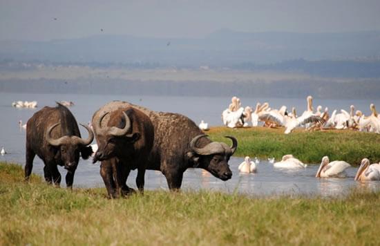 Lake Nakuru National Park Daytrip