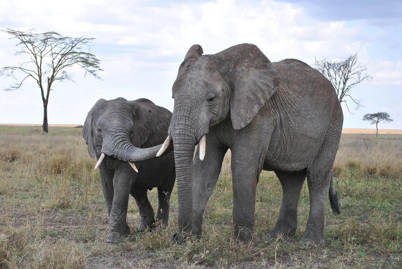 An Elephant On A Tanzania Safari Big 5