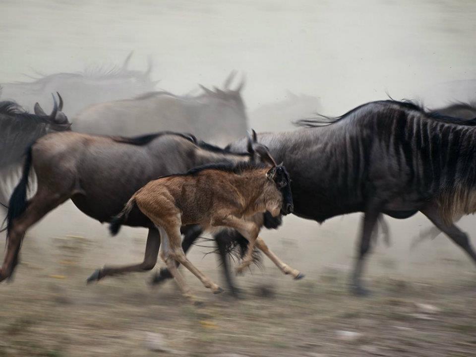 3 Days Migration Safari