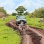 ngorongoro crater tours