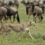 5 Day Tanzania Safari Holiday