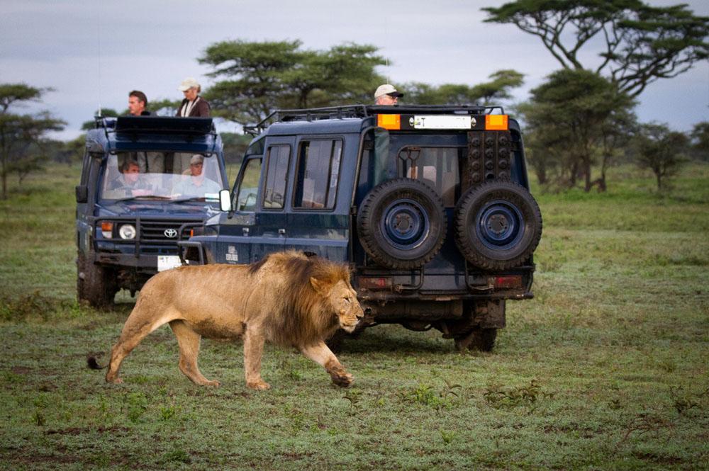 8 Day Kenya Tanzania Safari