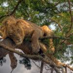 4 day uganda safari