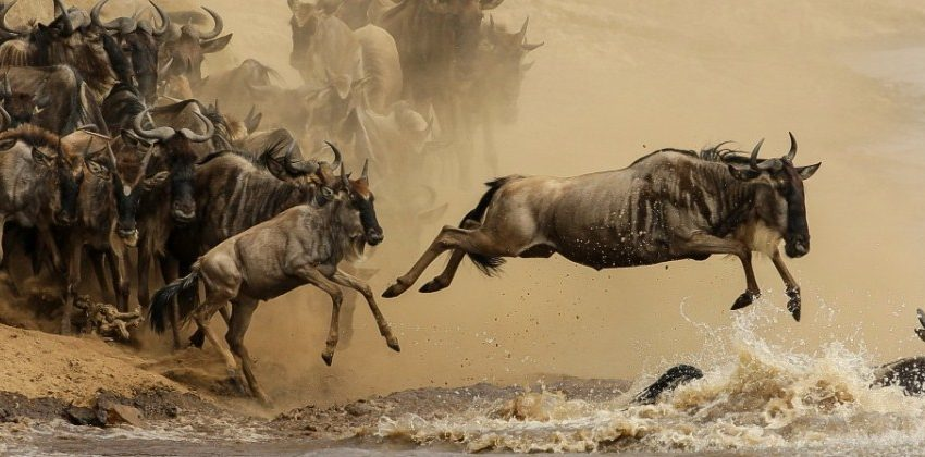 wildebeest-migration safari when to go