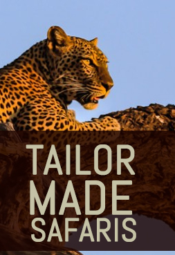 Tailor-made safaris